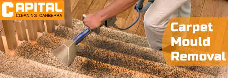 Carpet Mould Removal Murrumbateman