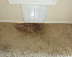Carpet Mould Removal Capital Hill