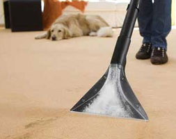 Carpet Sanitisation and Deodorisation Services