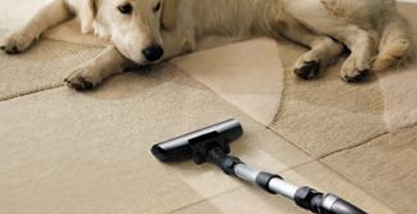 Pet Stain Removal From Carpet