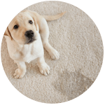 Carpet Pet Stains Removal