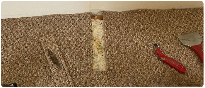 Repair Stretched Carpet After Steam Cleaning